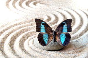 Toi mon beau papillon, tu es un magnifique messager de mes anges